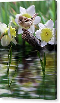 Bird On A Limb Canvas Print