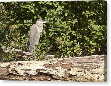 Bird On A Log Canvas Print