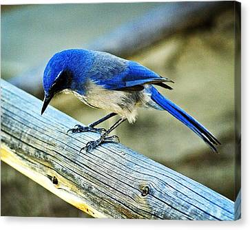 Bird On A Rail Canvas Print