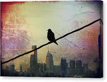 Bird On A Wire Canvas Print by Bill Cannon