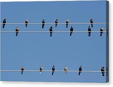 Bird On A Wire Canvas Print by Christine Till