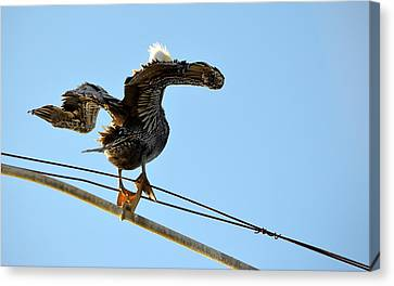 Canvas Print featuring the photograph Bird On The Wire by AJ Schibig
