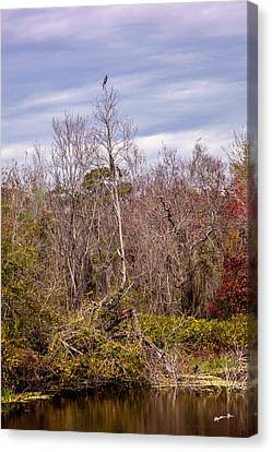 Canvas Print featuring the photograph Bird Out On A Limb 3 by Madeline Ellis