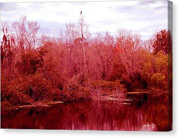 Canvas Print featuring the photograph Bird Out On A Limb by Madeline Ellis