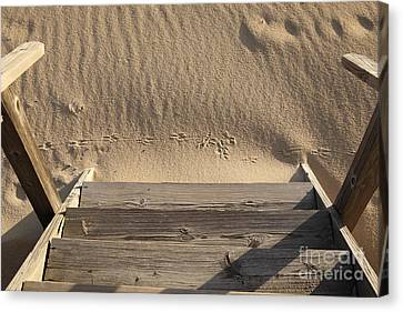 Bird Prints In The Sand Canvas Print by Bryan Attewell