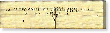 Bird Song Canvas Print by James BO Insogna
