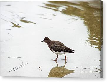 Canvas Print featuring the photograph Bird Walking On Beach by Mariola Bitner