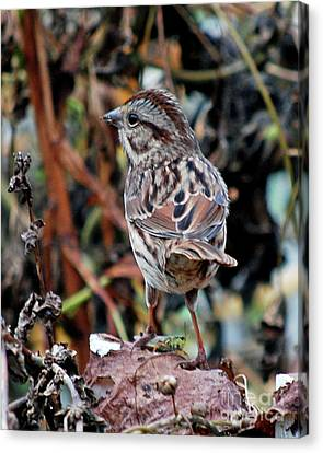 Canvas Print featuring the photograph Bird With Grasshopper by Lila Fisher-Wenzel