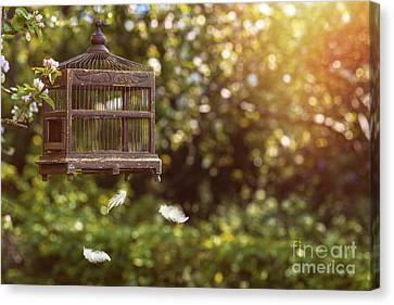 Sunflare Canvas Print - Birdcage In Spring by Amanda Elwell