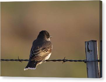 Birdie On A Wire Canvas Print by Jeff Swan