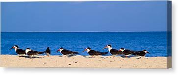 Birdline Canvas Print by Gary Dean Mercer Clark