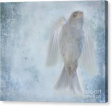 Birdness Canvas Print by Jim Wright