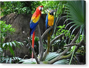 Parrots - Birds 03 Canvas Print
