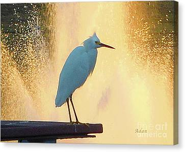 Birds And Fun At Butler Park Austin - Birds 3 Detail Macro Canvas Print by Felipe Adan Lerma