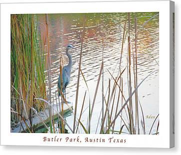 Birds And Fun At Butler Park Austin - Birds 4 Poster Greeting Card Canvas Print by Felipe Adan Lerma