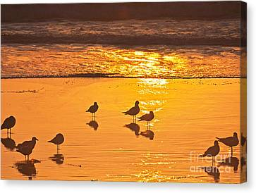 Birds At Sunset Canvas Print by Loriannah Hespe