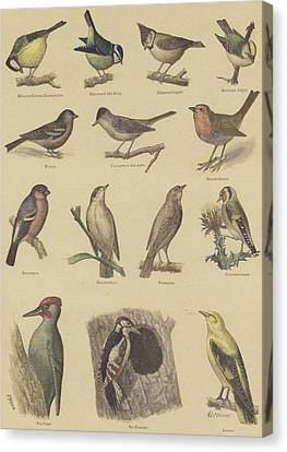Birds Beneficial To Agriculture Canvas Print by French School