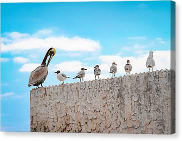 Birds Catching Up On News Canvas Print