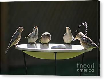 Birds Drinking From Bird Bath In Summer Sunshine Canvas Print by Gordon Wood
