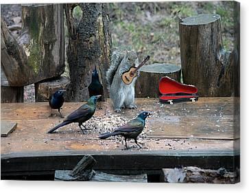 Birds Enjoying The Music Canvas Print by Dan Friend