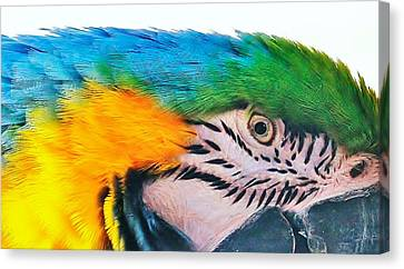 Canvas Print featuring the photograph Bird's Eye View by Al Fritz