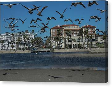 Birds Flight From The Right Of Passage Canvas Print by Kenneth James