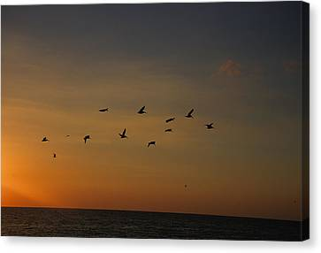 Birds Fly Into The Wind Above The Gulf Canvas Print by Stacy Gold