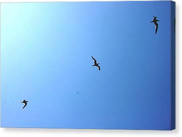 Birds Fly Canvas Print