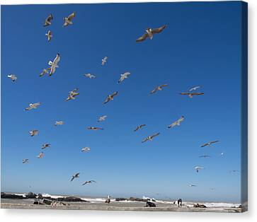 Birds Flying Along The Waters Edge Canvas Print by Panoramic Images