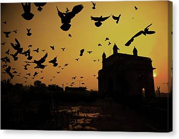 Birds In Flight At Gateway Of India Canvas Print by Photograph by Jayati Saha