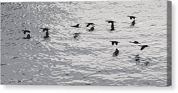 Birds In Flight. Canvas Print by Robert Rodda