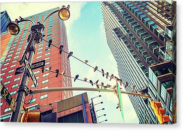 Birds In New York City Canvas Print