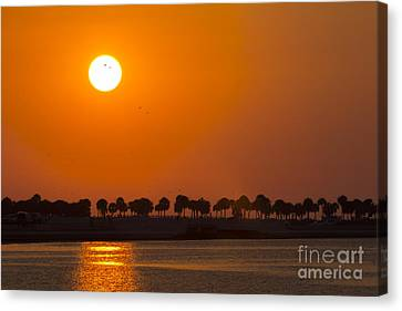 Spring Scenes Canvas Print - Birds In The Sun by Marvin Spates