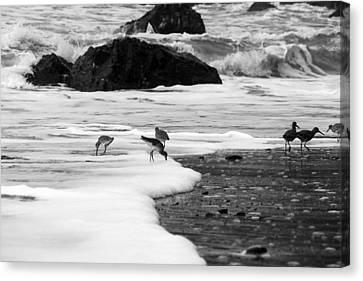 Birds In The Waves Black And White Canvas Print by Sierra Vance