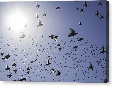 Canvas Print featuring the photograph Birds by Lynn Geoffroy