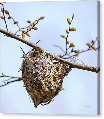 Canvas Print featuring the photograph Birds Nest by Christina Rollo