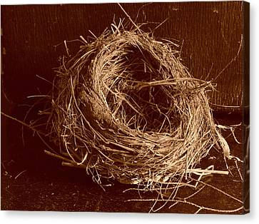 Bird's Nest Sepia Canvas Print