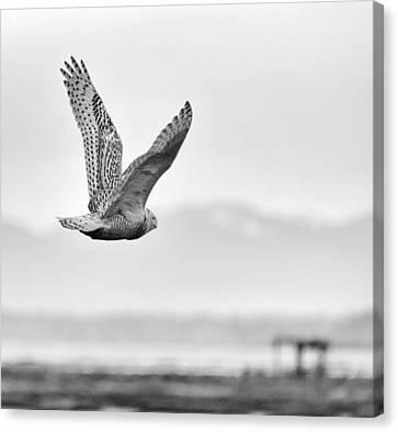 Birds Of Bc - No.16 - Snowy Owl - Bubo Scandiacus Canvas Print by Paul W Sharpe Aka Wizard of Wonders