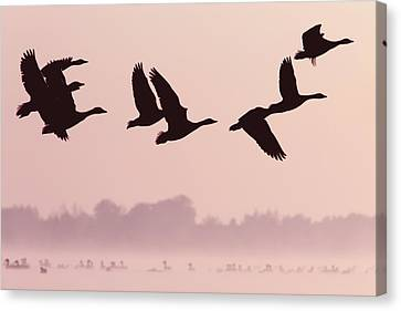 Birds On A Mission Canvas Print by Roeselien Raimond