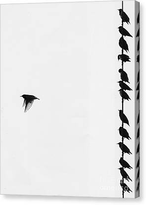 Birds On A Wire Canvas Print by Jim Wright