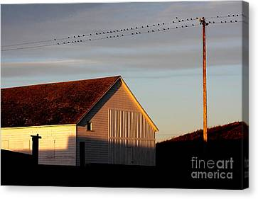 Birds On A Wire Canvas Print by Wingsdomain Art and Photography