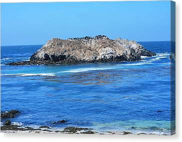 Bird Rock Canvas Print