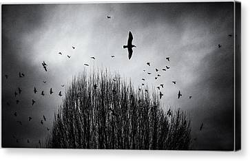 Birds Over Bush Canvas Print by Peter v Quenter