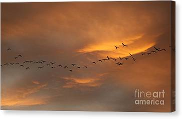 Birds Over San Miguel De Allende Canvas Print by John  Kolenberg