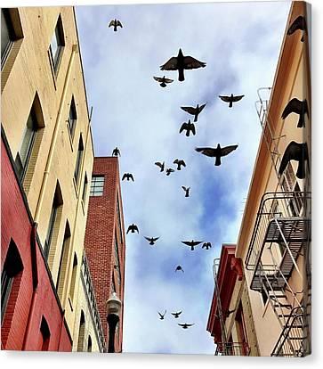 Canvas Print - Birds Overhead by Julie Gebhardt