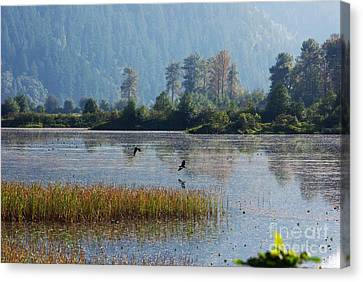 Birds Paradise Canvas Print by Victor K