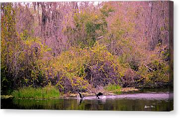 Canvas Print featuring the photograph Birds Playing In The Pond 2 by Madeline Ellis