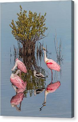Birds, Reflections, And Mangrove Bush Canvas Print