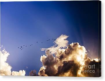 Birds Soaring Sky High  Canvas Print by Jorgo Photography - Wall Art Gallery