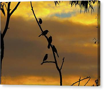 Canvas Print featuring the photograph Birdstop by Mark Blauhoefer